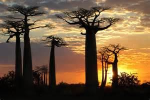Morondava Day Tour Packages